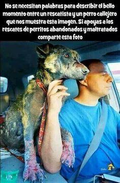 El bello momento entre un perro callejero y su salvador, sin palabras...