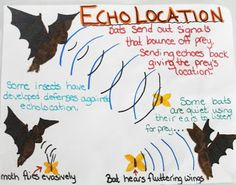 Learn all about bats and how they use echolocation to track their prey! Not all bats eat insects though some eat fruit and nectar! Learn the anatomy of different types of bats and games to play to demonstrate echolocation and caregiving techniques! Student Teaching, Teaching Science, Science Activities, Bat Activities For Kids, Teaching Ideas, Enrichment Activities, Animal Activities, Preschool Science, Science Ideas