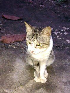 Meow 4