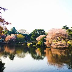 .@paulatheexplorer   Shinjuku Gyoen's manicured gardens, prettified by all kinds of cherry blossom...   Webstagram