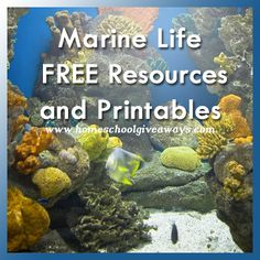 Check out these free marine life printables and resources at Homeschool Giveaways. You'll find over 25 free resources to use in your studies!  Fin
