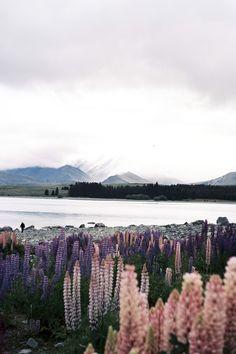 Lake Tekapo, New Zealand Beautiful World, Beautiful Places, Landscape Photography, Nature Photography, Lake Tekapo, Adventure Is Out There, Beautiful Landscapes, The Great Outdoors, Wonders Of The World