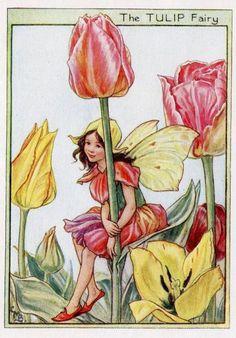 Tulip Flower Fairy Vintage Print, c.1950 Cicely Mary Barker Book Plate Illustration. $19.95, via Etsy.