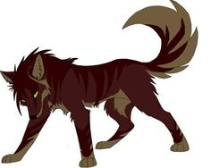 Brown Wolf Pictures, Images and Photos