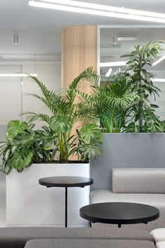 Flora of office in Belgrade. Interior Design Plants, Interior Design Presentation, Office Interior Design, Plant Design, Office Interiors, House Construction Plan, Cool Office Space, Green Office, Office Plants