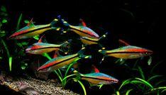 Aquarium Care for Freshwater Fish Saltwater Aquarium Setup, Tropical Fish Aquarium, Tropical Fish Tanks, Aquarium Fish Tank, Aquarium Pump, Vivarium, Paludarium, Tropical Freshwater Fish, Freshwater Aquarium Fish