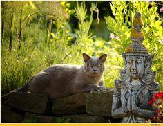 Почему кошка считается священным животным?
