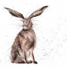 Congratulations to Hannah Dale of Wrendale Designs on receiving a Henries award for her Country Set, 'Best Fine Art' range year running! What an achievement! Animal Paintings, Animal Drawings, Drawing Animals, Watercolor Animals, Watercolor Paintings, Watercolours, Hare Pictures, Hare Images, Rabbit Pictures