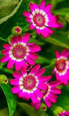 aplusphotos.blogspot.jp/search/label/Flowers?m=0