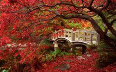 automne | Fonds d ecran paysage d automne