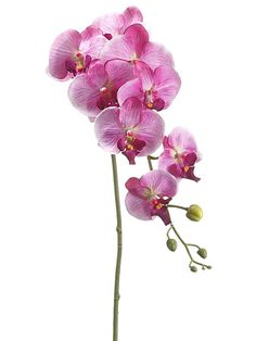 Phalaenopsis Orchid Spray in Two Tone Purple
