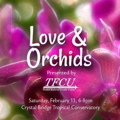 February in the Gardens – Myriad Botanical Gardens Myriad Botanical Gardens, Orchids, February, Lily, Orchid