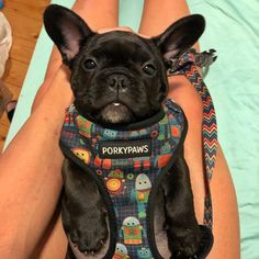 HAPPY FRIDAY FRIENDS! Not long now until little Onny can go walkies! Hang in there padawan 1 more week then you can parade your handsome face around! #porkypaws