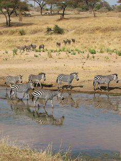 Tarangire National Park, Tanzania, Africa