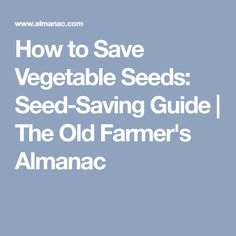 How to Save Vegetable Seeds: Seed-Saving Guide | The Old Farmer's Almanac