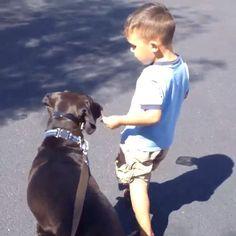 Shadow the Black Labrador