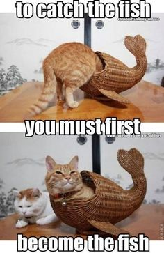 To catch the fish, you must first become the fish funny memes meme humor funny memes animal memes cat memes Funny Animal Jokes, Funny Cat Memes, Dog Memes, Cute Funny Animals, Cute Baby Animals, Cute Cats, Funny Cats, Funny Quotes, Funniest Memes