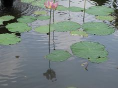 Ma photo Bali Bali, Plant Leaves, Aqua, Photos, Plants, Painting, Water, Pictures, Painting Art