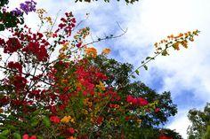 céu colorido