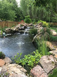 Progression of the plantings in and around our water feature and koi pond Fish Pond Gardens, Koi Fish Pond, Koi Ponds, Small Gardens, Backyard Water Feature, Ponds Backyard, Outdoor Fish Ponds, Backyard Waterfalls, Garden Ponds