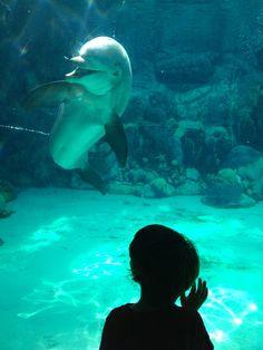 #SeaWorld #golfinhos
