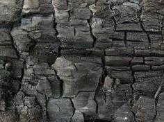 Image result for burnt wood