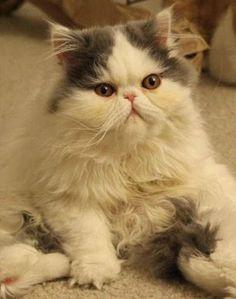 Cat Cat Cat :D
