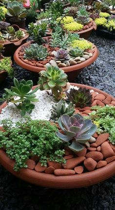 succulents garden Stylish 20 Easy And Cheap Ways To Make Succulent Garden In Your Backyard Succulent Gardening, Succulent Terrarium, Planting Succulents, Container Gardening, Planting Flowers, Watering Succulents, Succulent Ideas, Succulent Plants, Succulent Rock Garden