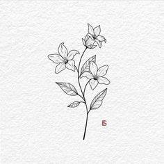 AllyBeth Design Co , ink art. Jasmine Flower Tattoos, Small Flower Tattoos, Cute Small Tattoos, Small Lily Tattoo, Kunst Tattoos, Tattoo Drawings, Tattoo Ink, Tattoo Illustrations, Floral Illustrations