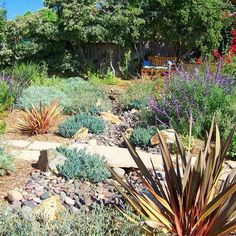 Colorado Xeriscape Design Ideas, Pictures, Remodel, And Decor   Page 6