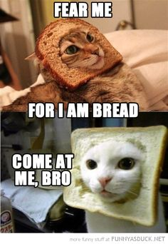 Fear me! For I am bread. Come at me, bro.  The original bread cat and another. Cat breading.