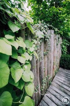 Onderhoudsvriendelijke robuuste tuin :  Tuin door De Rooy Hoveniers Natural Fence, Natural Garden, Colours, Nature, Flowers, Outdoor, Inspireren, Fencing, Gardening