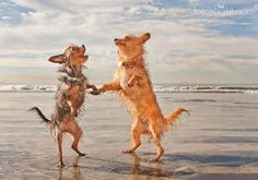 Woo Hoo! These two dogs (Poppy and Brooklyn) are add the beach and so happy they are ready to dance!