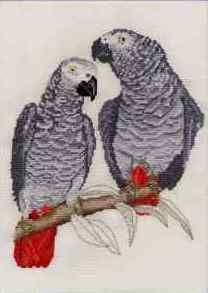 African Grey Parrots cross stitch kit