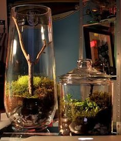Simple terrariums using moss and sticks