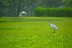Benefícios do gramado bem cuidado atrai as aves