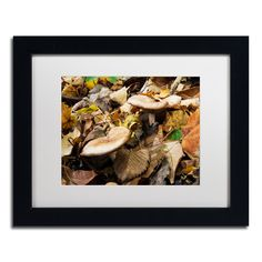 Kurt Shaffer 'Mushrooms in the Leaves' Framed Canvas Art (11 x 14 inches frame)