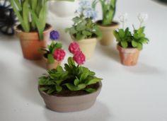 Miniature Dollhouse Plant White Dark Pink Primula