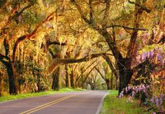 GAWDDDD. I loved livinging in Tallahassee. The drives were so pretty and relaxing. Canopy Road near Tallahassee Florida