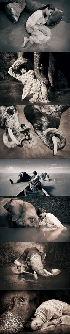 Elephants by Gregory Colbert