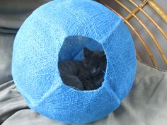 Elly Hanging out in her blue CatBall