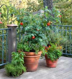 Bonnie Plants is a leading provider of plants for your vegetable garden or herb garden. Expert gardening tips help you with your plants. Tomato Garden, Herb Garden, Lawn And Garden, Garden Plants, Tomato Cage, Tomato Plants, Container Gardening, Gardening Tips, Vegetable Gardening