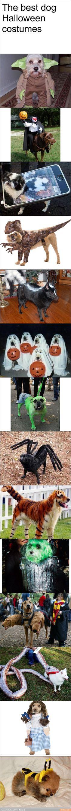 Dog costumes / iFunny :)