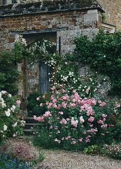 Roses next to the entry to a walled garden at Broughton Castle. Oxfordshire