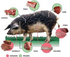 Het vlees van het Mangalica varken uit #Hongarije is goed te gebruiken. Superfoods, Toms, Movies, Movie Posters, Animals, Branding, Fan, Club, Pork