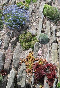 Awesome Rockery Designs Ideas For Small Gardens 44 Rock Garden Plants, Garden Stones, Succulents Garden, House Plants, Garden Crafts, Garden Art, Garden Design, Garden Ideas, Hampton Garden