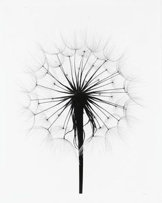 #Photography #black and white, would make an awesome tattoo