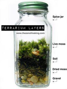 Terrarium.