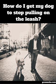 Understanding how to stop your dog from pulling the leash is something that every dog owner needs to overcome in order to be able to walk their dog in an enjoyable manor. For more info visit www.groomchu.com or click on the picture!