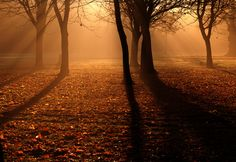 Atmospheric Trees by Chris Willis 10, via Flickr